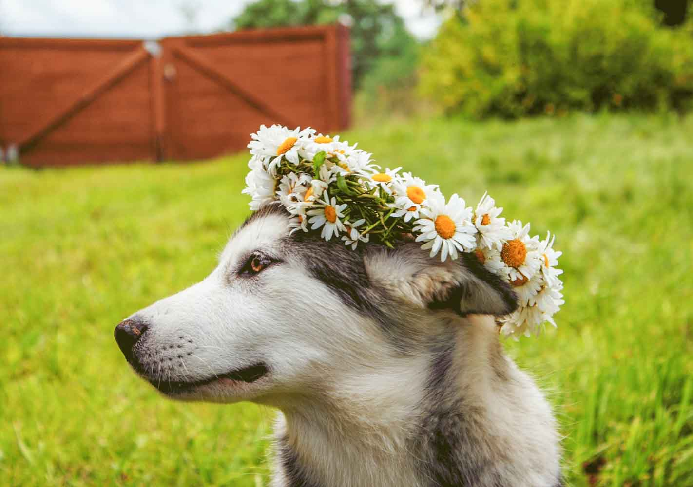 We all want our fur friend to be part of our lives. Think about including your handsome fur baby in your wedding today.